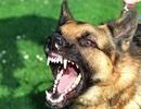 Bé trai 7 tuổi tử vong nghi bị chó dại cắn  từ trước
