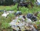Hà Tĩnh: Di chỉ khảo cổ Quốc gia trở thành nơi đổ rác, chăn thả gia súc!