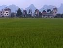 Đẹp nao lòng cảnh chiều muộn ở vùng thôn quê thanh bình giữa Hà Nội