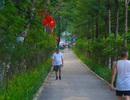 Người Hà Nội thích thú với đường đi bộ rợp cây xanh lãng mạn như phim Hàn