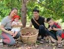 Vườn trái cây trĩu quả của gia đình diễn viên Lê Phươngở Tây Ninh