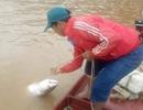 """Theo chân ngư phủ săn """"thủy quái"""" sông Đà"""