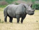 Buôn bán động vật hoang dã: Ẩn họa đại dịch toàn cầu?