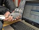 Hài hước cuộc đua truyền dữ liệu giữa bồ câu đưa thư và mạng Internet ADSL