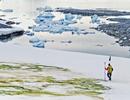 Biến đổi khí hậu biến tuyết Nam Cực thành màu xanh