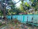 Đà Nẵng yêu cầu kiểm tra cây cổ thụ sân trường, nhất là loài phượng vĩ