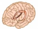 Não của chúng ta cần gì để ghi nhớ?