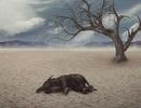 Sự kiện tuyệt chủng hàng loạt thứ 6 của Trái đất đang tăng tốc