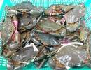 Bất chấp Covid-19, Trung Quốc vẫn tiêu thụ hơn 880 tỷ đồng hải sản Việt Nam