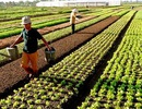 Quốc hội đồng ý miễn 7.500 tỷ đồng/năm thuế sử dụng đất nông nghiệp