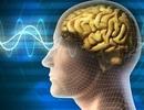 Những ứng dụng giúp làm việc tập trung hơn và cải thiện chất lượng giấc ngủ