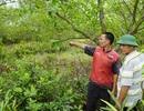 Phó chủ tịch huyện bị cảnh cáo do vi phạm trong quản lý đất đai