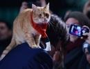 Chú mèo nổi tiếng trong cả văn học và điện ảnh đã vừa qua đời ở tuổi 14