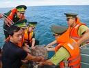 Bắt được đồi mồi 25kg, thợ câu nhờ lực lượng chức năng thả về biển