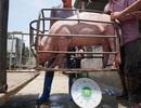 """Giá lợn hơi cao ngất ngưởng vì dựa theo """"ông lớn"""" ngành chăn nuôi?"""