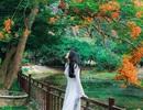 """Phượng mọc giữa nhà gỗ, hồ sen nở rộ gây sốt ở """"thánh địa sống ảo"""""""