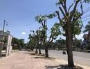TP Vinh lý giải việc cắt ngọn hàng loạt cây xanh giữa nắng nóng đỉnh điểm