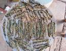 Choáng với 63 con rết tìm thấy trong dạ dày cáo