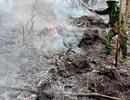 Rừng thông lại bốc cháy, huy động toàn lực để khống chế