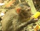 Thả 42 cá thể động vật quý hiếm về tự nhiên