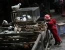 """Dân Trung Quốc """"kêu trời"""" khi chính phủ cấm bán gia cầm sống tại chợ"""