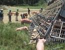 Hàng chục con lợn chạy khắp ruộng sau một vụ lật xe