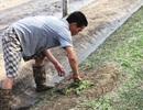 Hoa màu hỏng hết sau mưa lụt, nông dân phấp phỏng gieo vụ mới