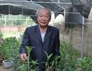 """Lão nông """"đánh cược với trời"""", trồng hoa ly thu trăm triệu"""