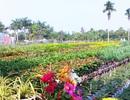 Ảnh đẹp làng hoa Sa Đéc dưới ống kính smartphone