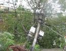 Đà Nẵng tan hoang sau cơn bão mạnh