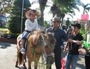 """Đà Nẵng: Dịch vụ cưỡi ngựa chụp hình """"hút khách"""""""