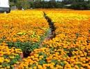 """""""Vương quốc"""" hoa, kiểng rộn ràng đưa sản phẩm về phố"""