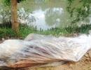 Kỳ lạ cá heo trôi dạt vào sông, cách cửa biển hơn 100 km