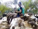 Đổ xô săn lùng bonsai linh chi 5 triệu đồng/chậu làm quà biếu Tết