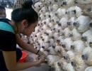 Người dân Sài thành rộ trào lưu trồng nấm sạch tại nhà