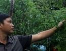 Cử nhân bỏ việc lương cao về quê nuôi lợn bằng thảo dược, kiếm tiền trăm triệu