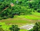 Ngắm ruộng bậc thang ở vùng cao Quảng Nam vào mùa gặt