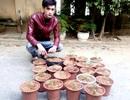Bắt đối tượng trồng cần sa để cung cấp cho con nghiện