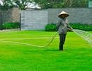 Khấm khá từ nghề trồng cỏ ngoại