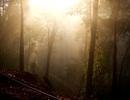 """Khám phá khu rừng hàng ngàn """"cụ"""" pơmu cổ thụ trên đỉnh Trường Sơn"""