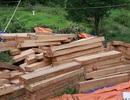 """Phát hiện thêm hàng trăm phách gỗ pơmu lậu, """"ém"""" gần trạm biên phòng"""