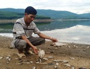 Khẩn trương kiểm tra nước hồ thủy lợi có cá chết hàng loạt
