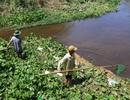 Hàng tấn cá chết bất thường trên sông