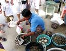 """Ra Cù Lao Chàm thưởng thức hải sản tươi sống """"giẫy đành đạch"""""""