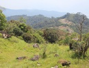 """100 ha rừng tự nhiên trong khu bảo tồn sẽ bị """"xẻ thịt""""?"""