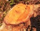 """Khu bảo tồn thiên nhiên """"chảy máu"""": UBND tỉnh chỉ đạo xin ý kiến Bộ NN&TNT"""