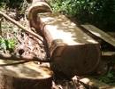 """""""Chảy máu"""" rừng đặc dụng trong khu bảo tồn thiên nhiên"""