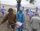 """Dân đổ ra biển lấy cát làm """"vũ khí"""" chống bão"""