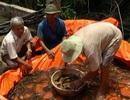 Thủy sản được mùa được giá, nông dân phấn khởi đón Tết