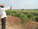 Không thu được đồng thuê đất nào của nông lâm trường quốc doanh